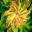 FLAME ON  by Sue Clark