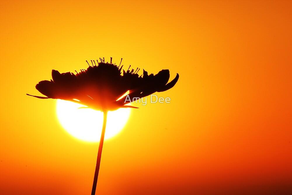 Wild Sun by Amy Dee