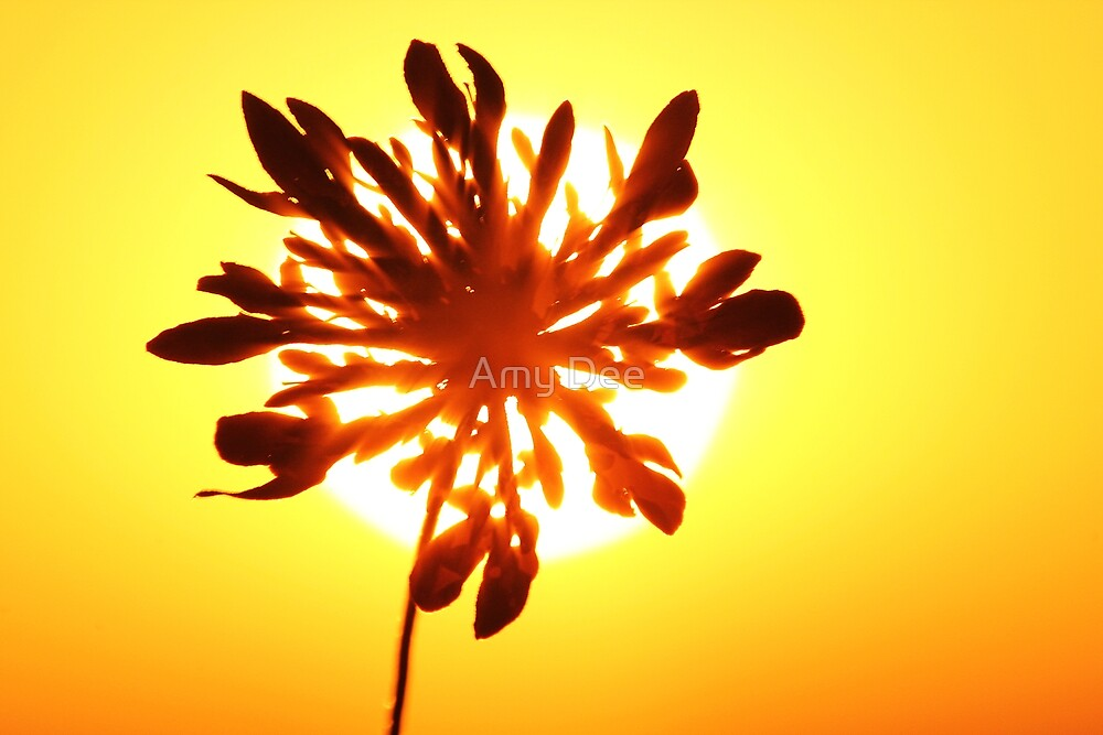 Wild Flower Sunset by Amy Dee