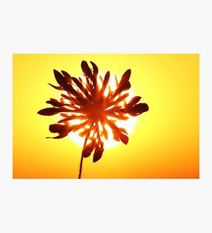 Wild Flower Sunset Photographic Print