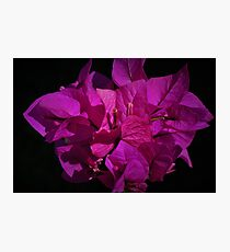 Purple Queen - Bougainvillea Photographic Print