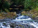 Cave Ck above Natural Bridge #2 by Odille Esmonde-Morgan