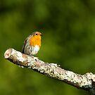lichen robin by jaffa