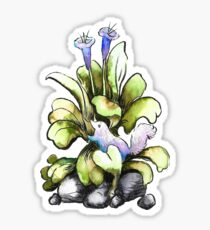 Sea Bluebells/Oyster Leaf Plant Sticker