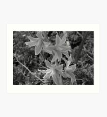 A Cluster of Flowers Art Print