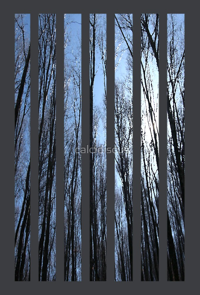 blue forest by calcidiscus