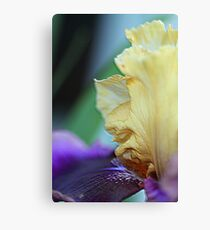 Tall Bearded Iris named Final Episode Canvas Print