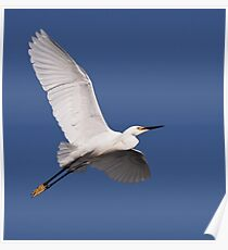 Snowy Egret in Flight Poster