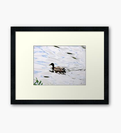 Duck on the Water Framed Print