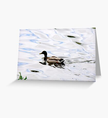 Duck on the Water Greeting Card