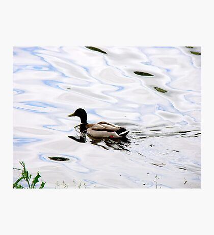 Duck on the Water Photographic Print