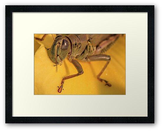 Silver Eye by Gary Horner