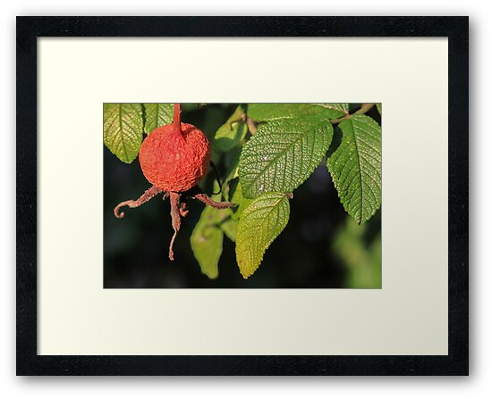 Berry and Veins by Gary Horner