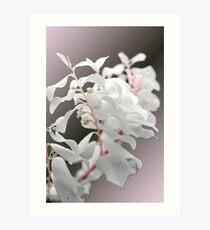 Tropical White Art Print