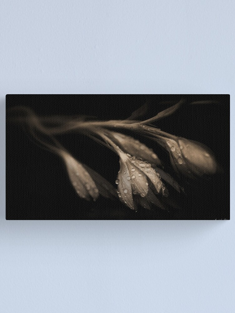 Alternate view of Desires of  the Heart Canvas Print