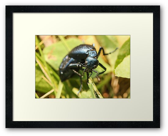 Black Insect 2 by Gary Horner