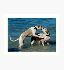 Whippets at Play Art Print