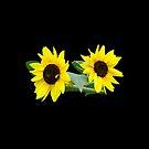 Sonnenblumen, Sonnenblume, Blumen, Garten, Natur von rhnaturestyles