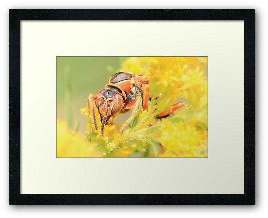 Wasp Closeup by Gary Horner