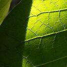 Green by minikin