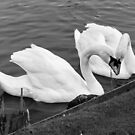 Lovers in B & W by AnnDixon