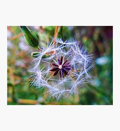 Nature's Pinwheel Photographic Print