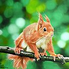 red squirrel by cathyscreations