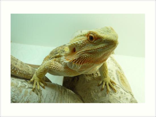 Bearded Dragon by Gulreth