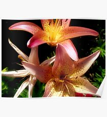 Pink and Yellow Lilies Poster