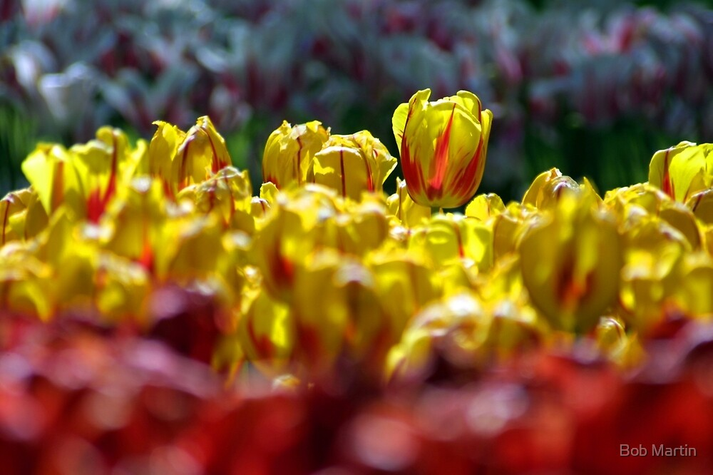 Yellow Red by Bob Martin