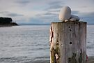 Pebbles on a mooring post (Findhorn Bay) by Cliff Williams