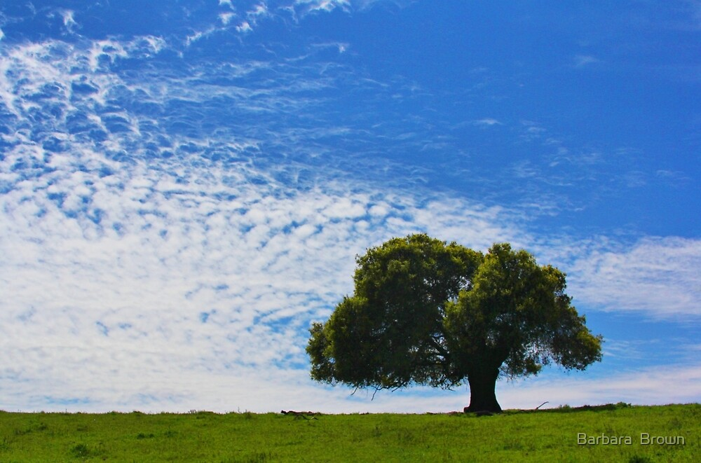 A Tree and Sky by Barbara  Brown