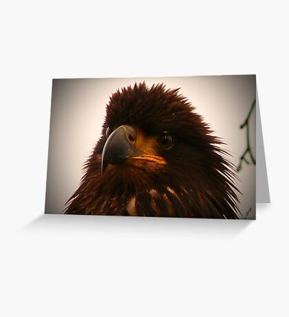 Young Bald Eagle ll Greeting Card