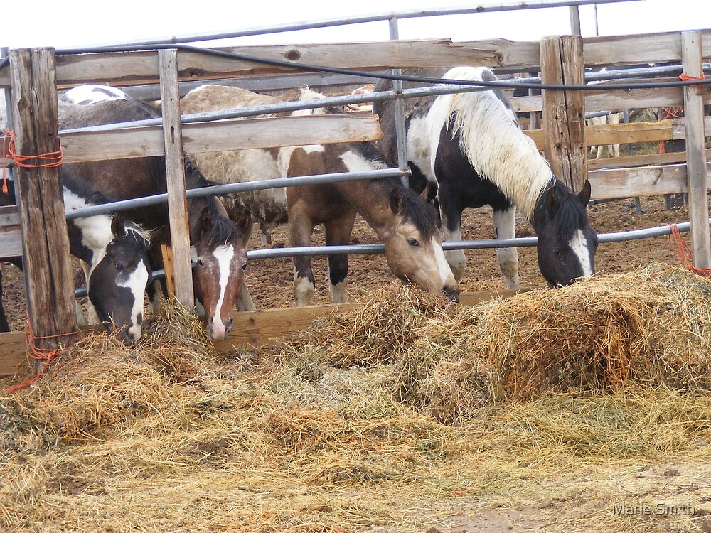 Broncos Belly Up to the Lunch Bar by Marie Smith