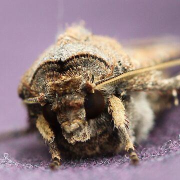My friend the house moth.. by jaxfae