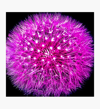 Lilac Dreams 2 Photographic Print