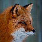 Am I Fox Worthy? by Sylvain Dumas
