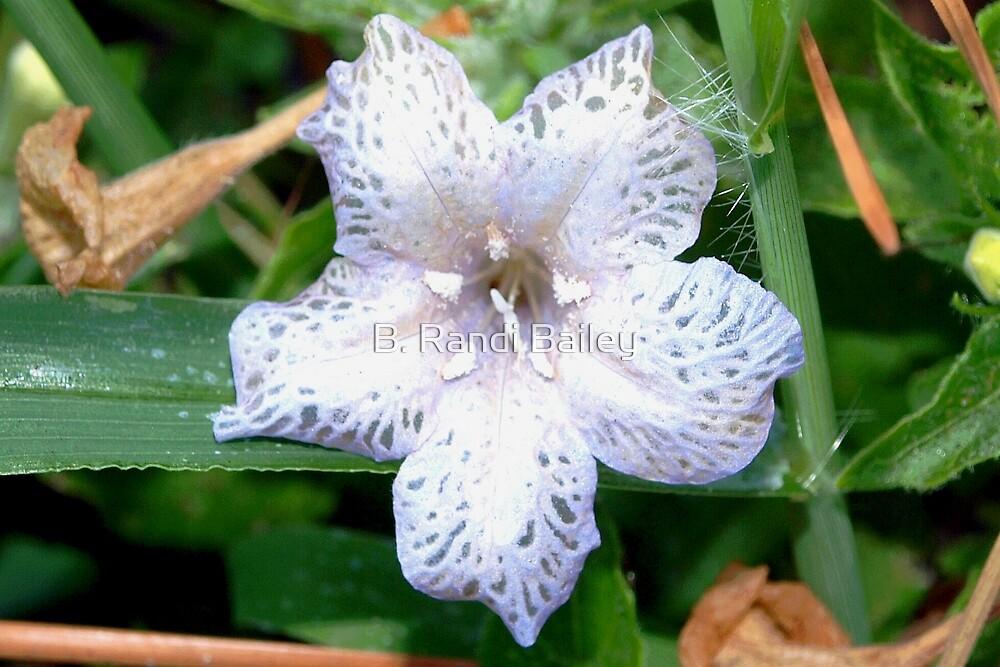 Lace flower by ♥⊱ B. Randi Bailey