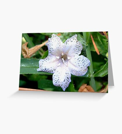 Lace flower Greeting Card