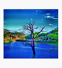 Dead tree in lake Photographic Print