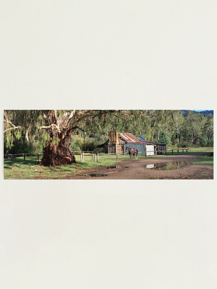 Alternate view of Frys Hut, Howqua Hills, Australia Photographic Print