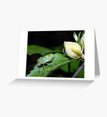 A Bug? Greeting Card
