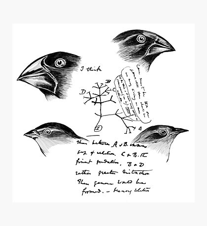 Darwin's Finches Photographic Print