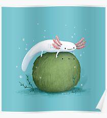 Axolotl auf einem Mossball Poster