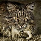The Fluff Muffin by K D Graves Photography