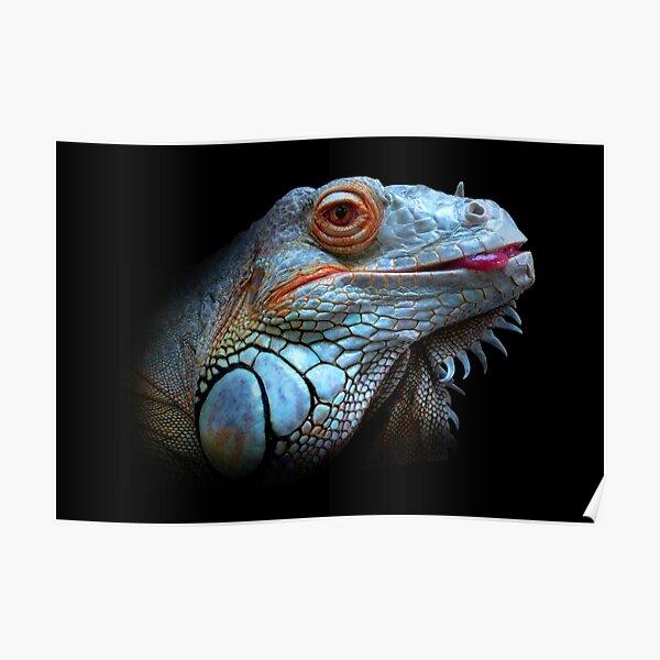 Cool Blue Iguana  Poster