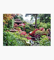 Coloured Garden Photographic Print
