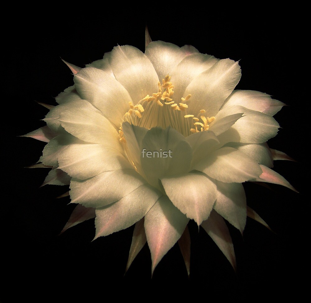 A look inside the flower by fenist