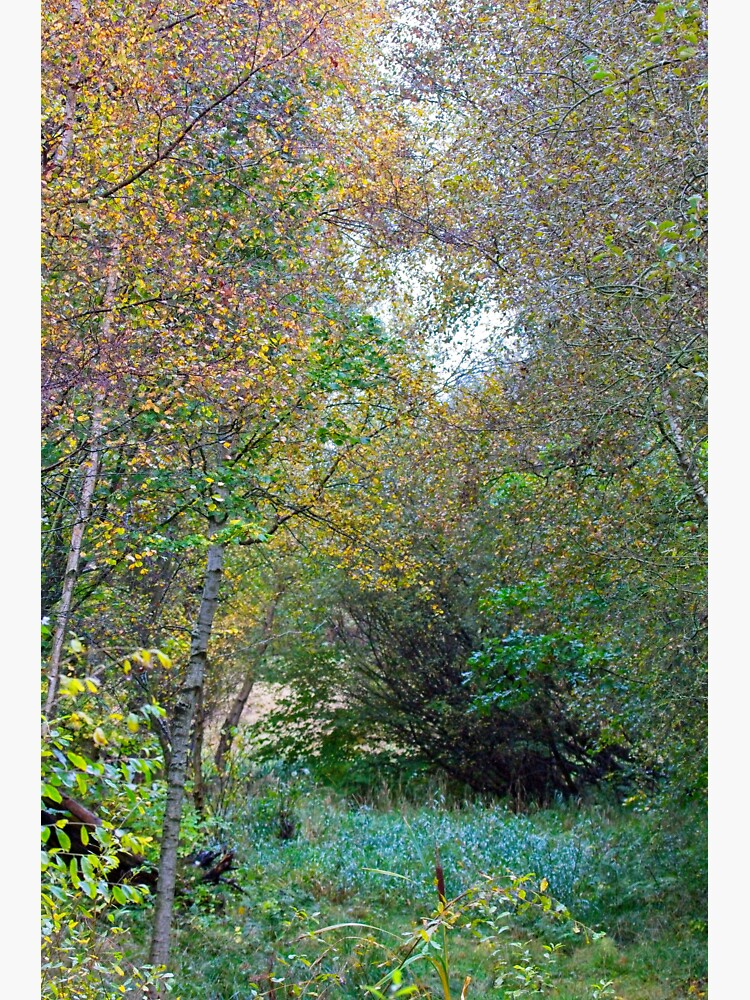 Autumnal Leaf Colours in Woodland Trees by robcole