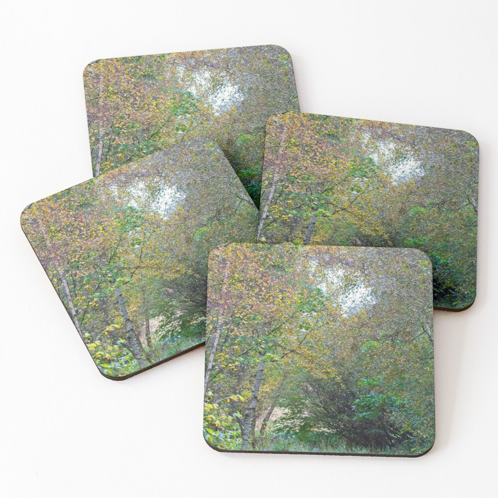 Autumnal Leaf Colours in Woodland Trees Coasters (Set of 4)